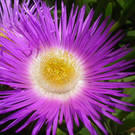Typical flower in southern, Samsung Galaxy Beam