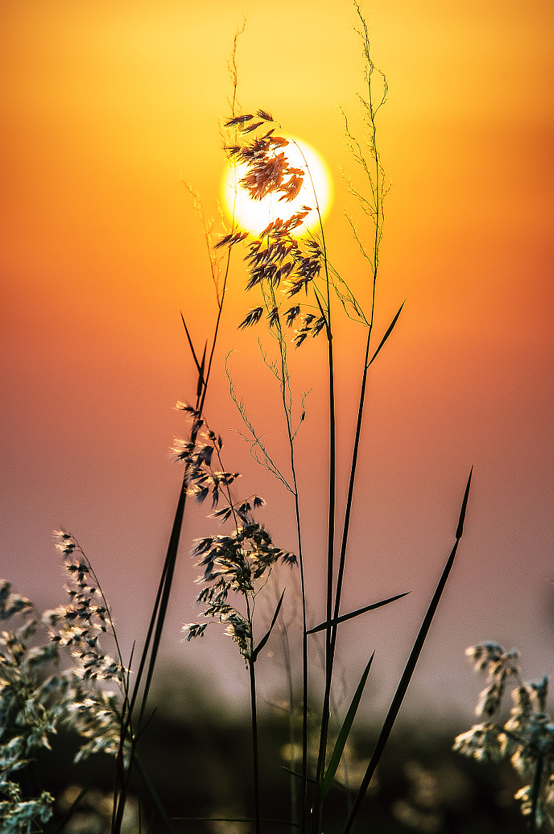 Photograph The simplicity of the sunset by Valter Patrial on 500px