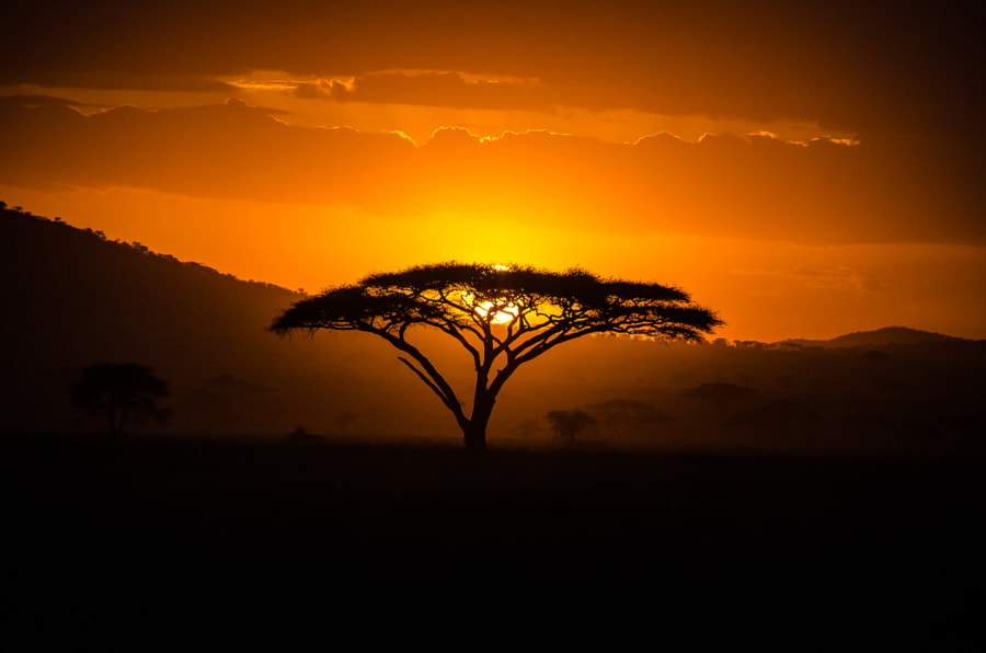 Sunset in Serengeti by Shakul Tandon on 500px.com