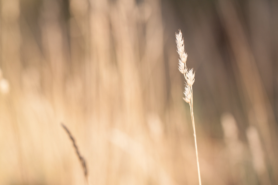 Photograph grain by Marion Fanieng on 500px