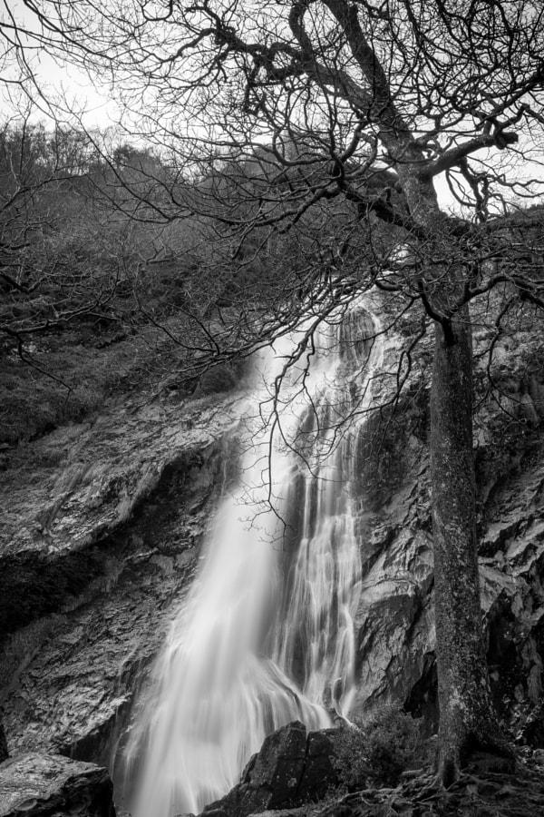Powerscourt Waterfall by Milo Denison on 500px.com