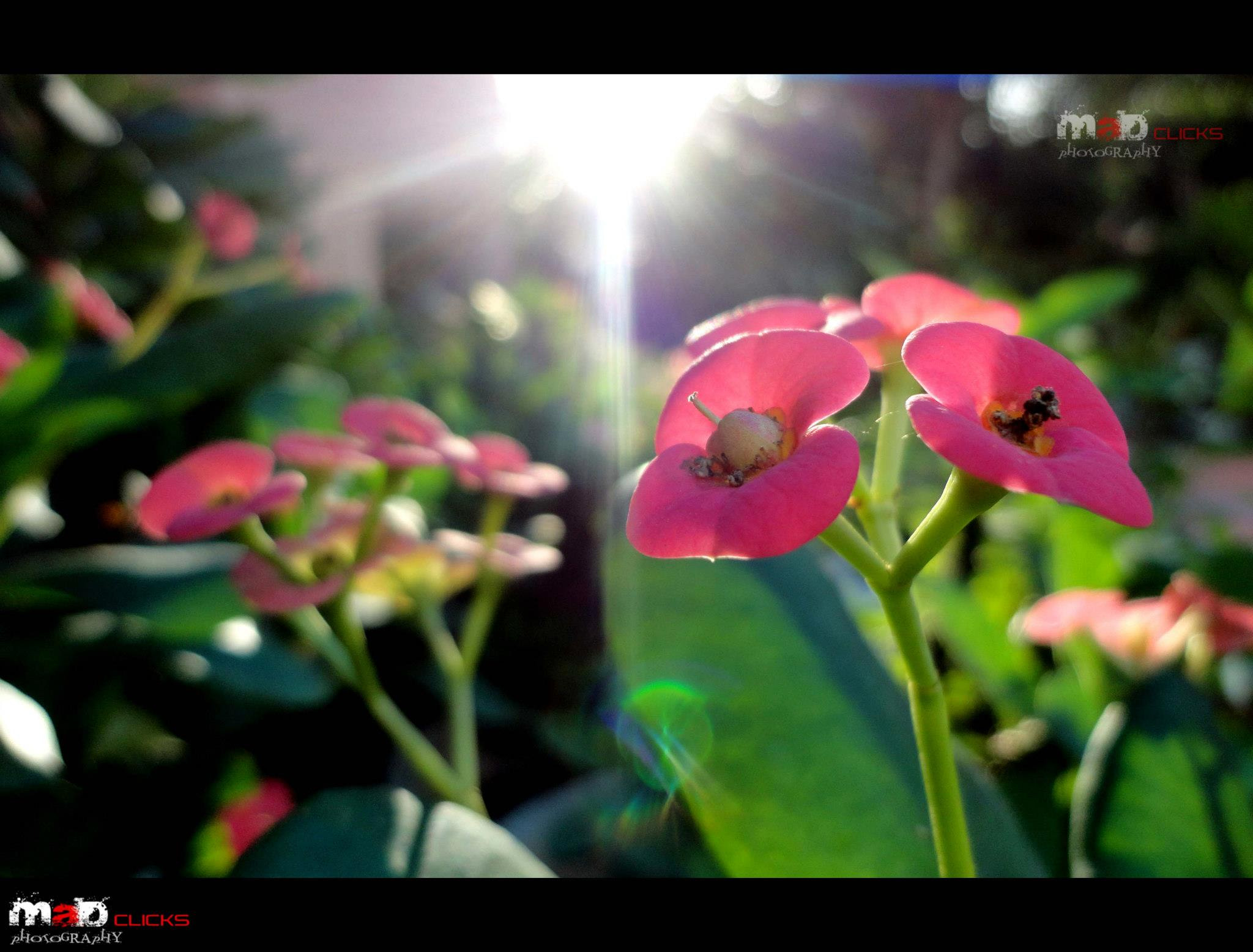 Photograph Blessed With Holly SUN by Athul Mk on 500px