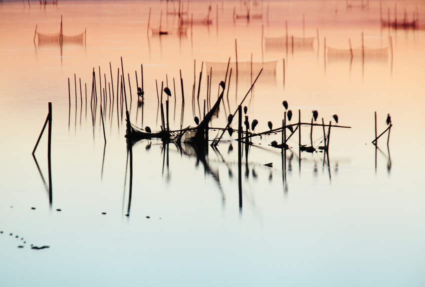 Photograph inbanuma marshland by HIDE KTG on 500px
