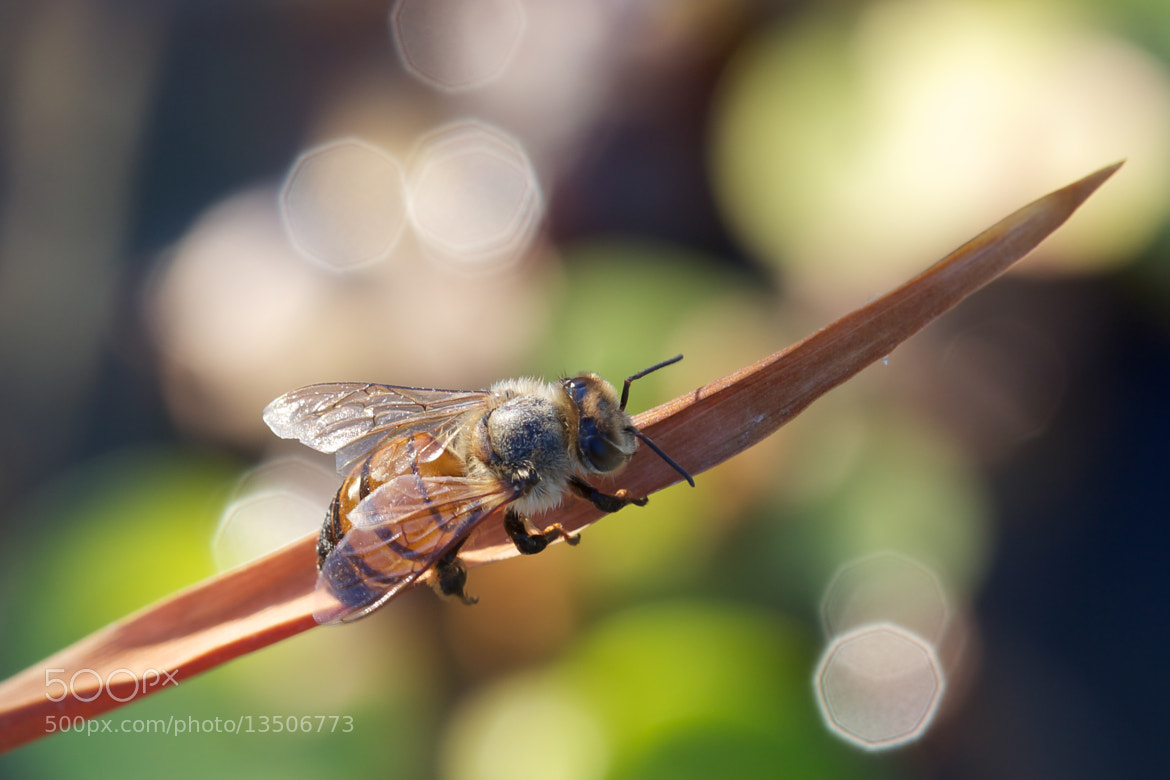 Photograph Untitled by Niccolò Franchini on 500px