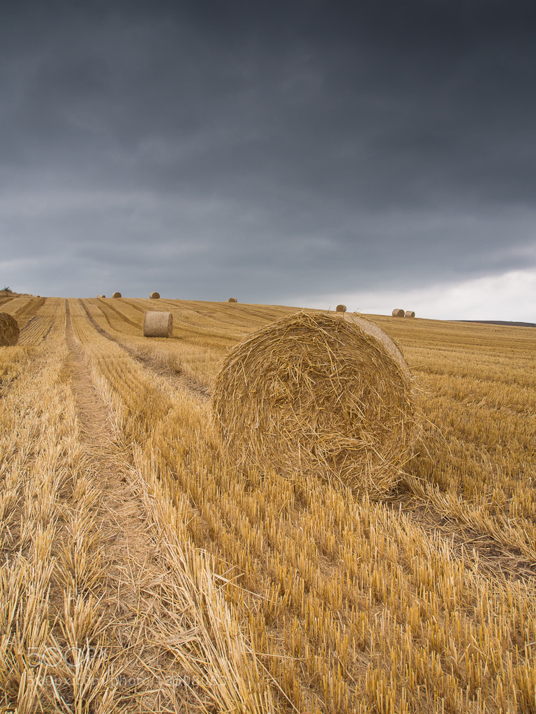 Photograph Harvest Time by Keith Muir on 500px