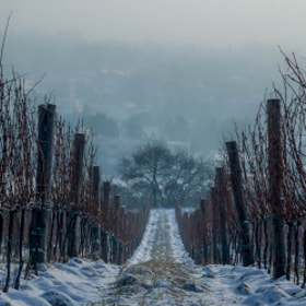 Photograph snowPath by Lukas Bachschwell