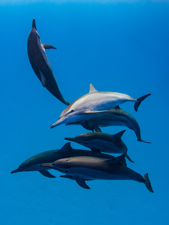 Dolphines having fun