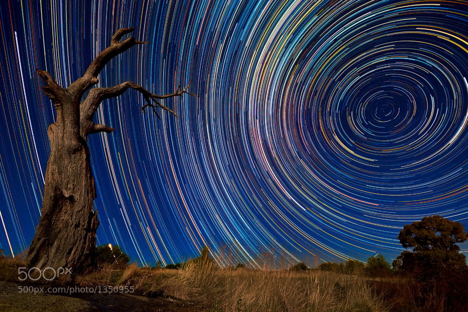 Photograph Dead Tree Stars by Lincoln Harrison on 500px