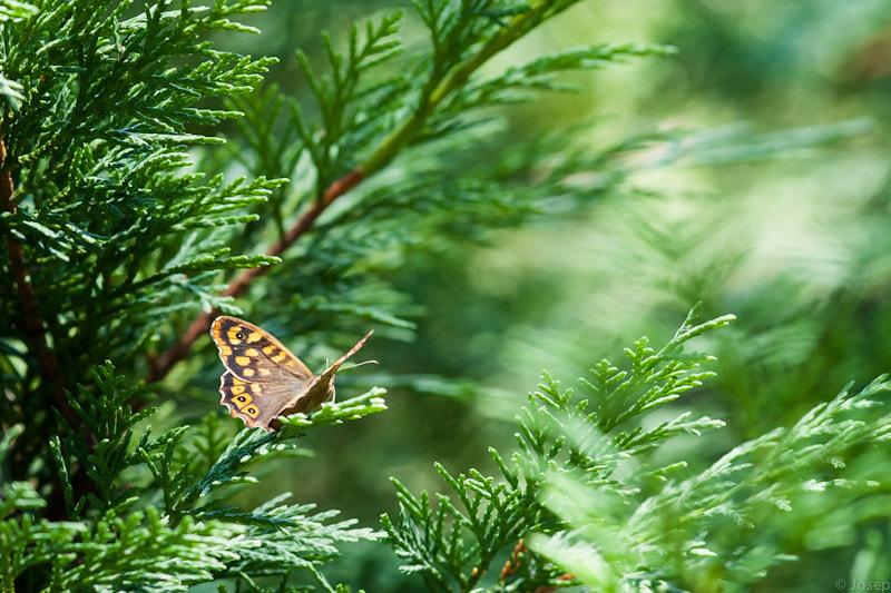 Photograph Nature and butterfly by Josep Girona on 500px