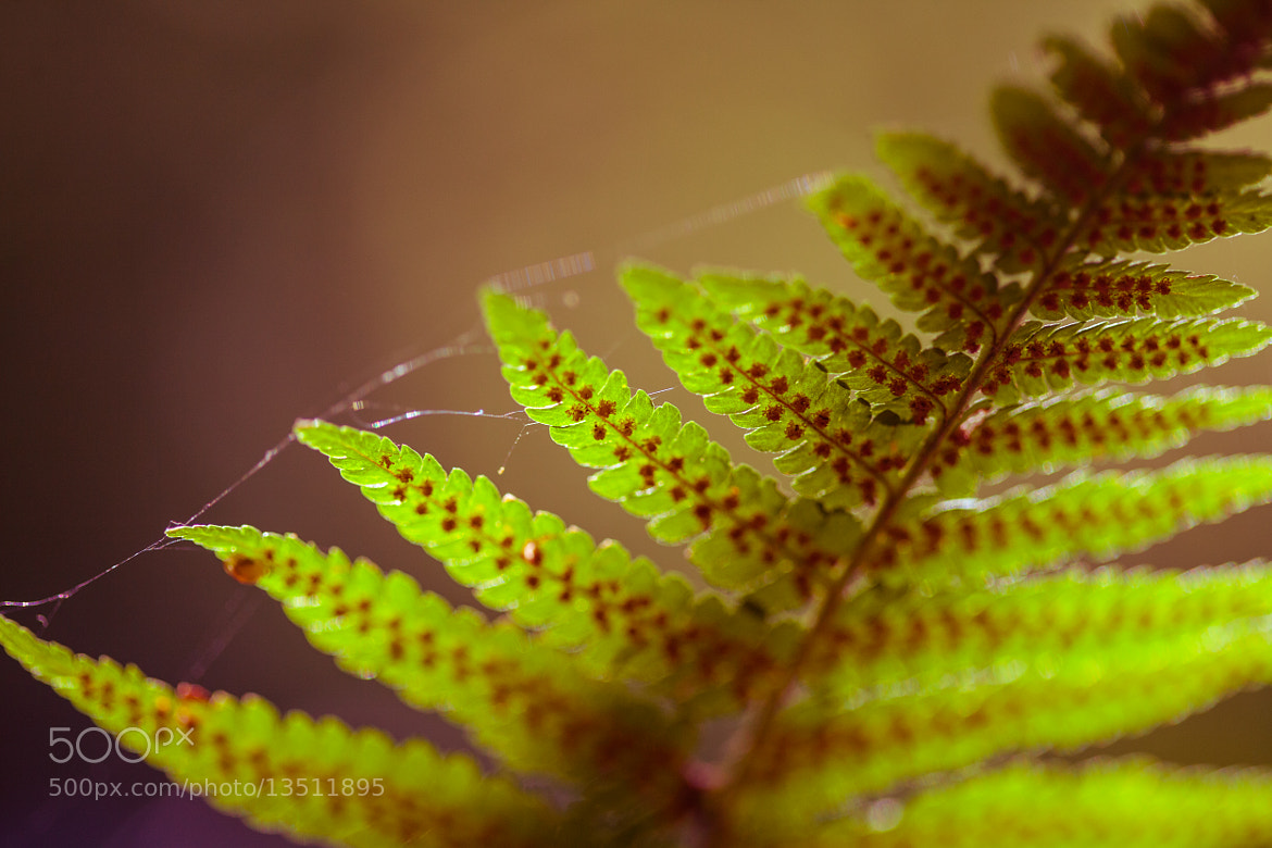Photograph Plant in the sunlight by Florian Klum on 500px