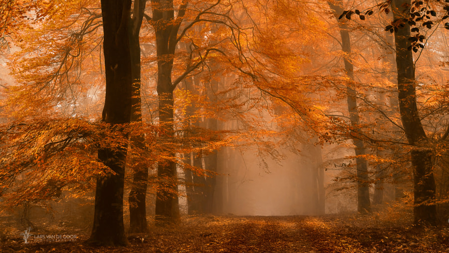 Schmorgenforgen by Lars van de Goor on 500px.com