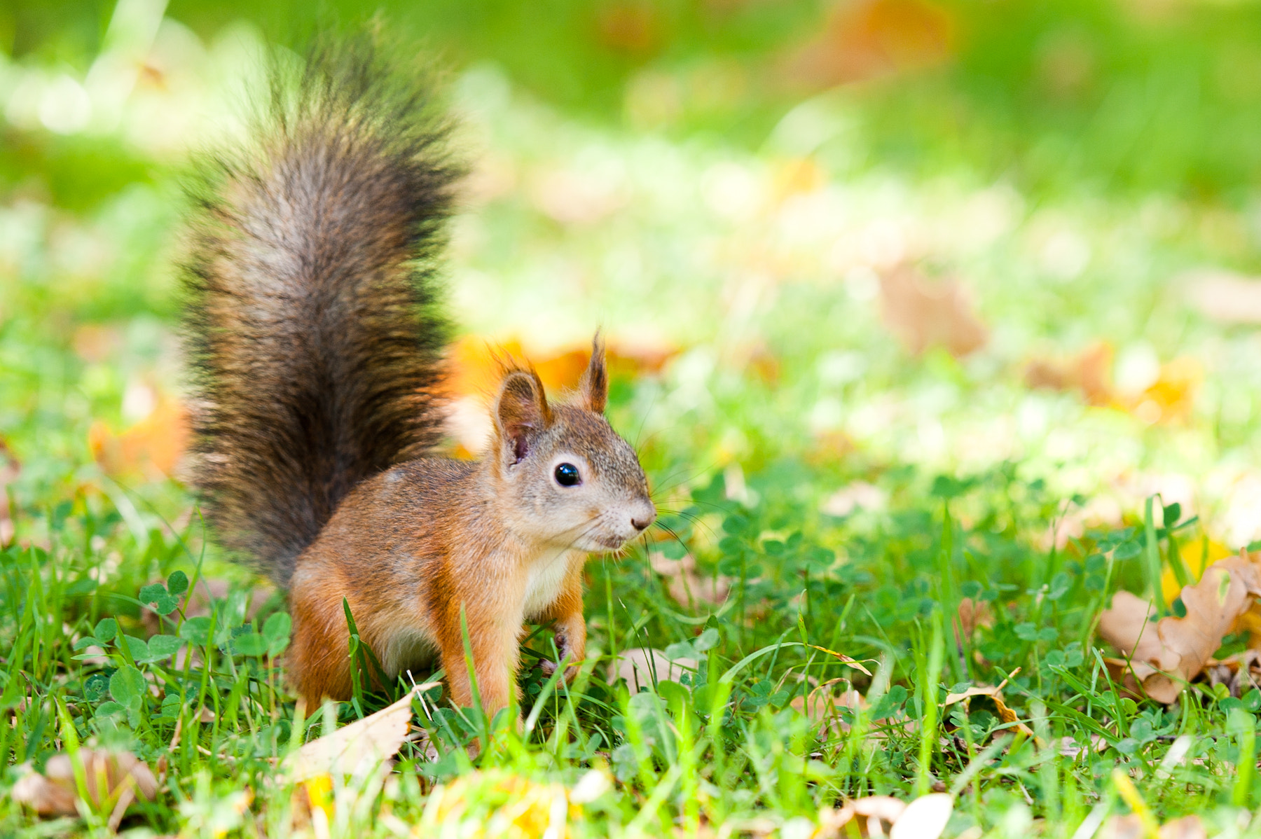 Photograph Little Squirrel by Anastasia Photo on 500px
