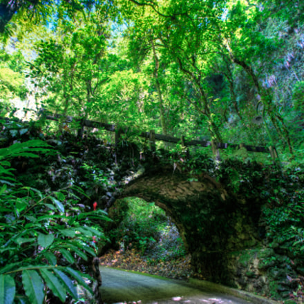 The bright green of the Puerto Rican forest before