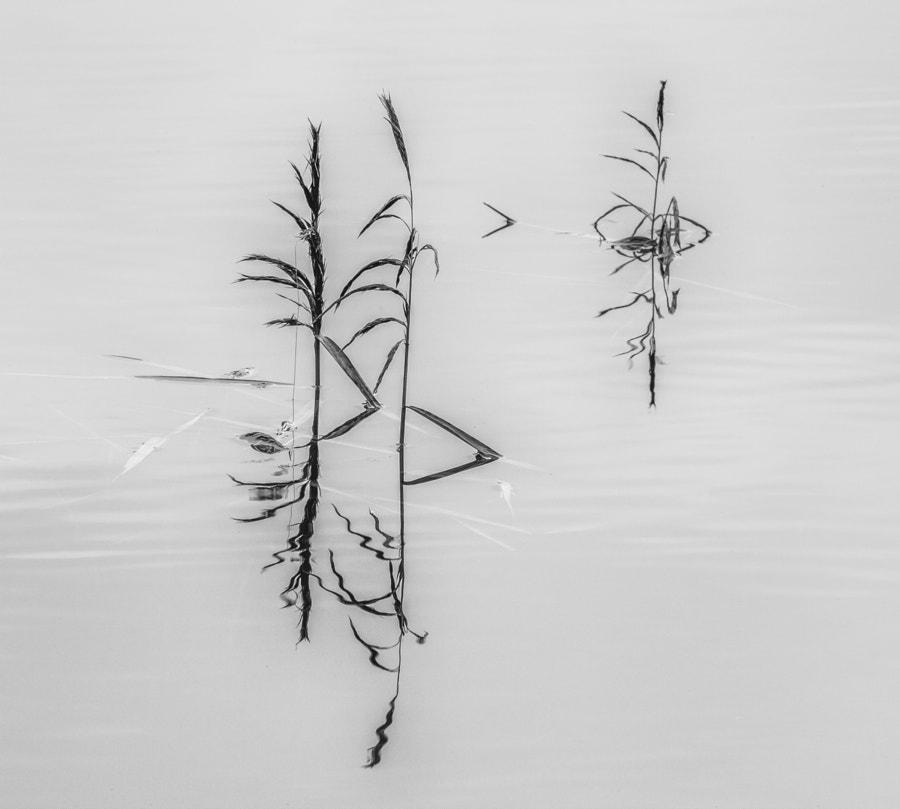 Grasses in Lake