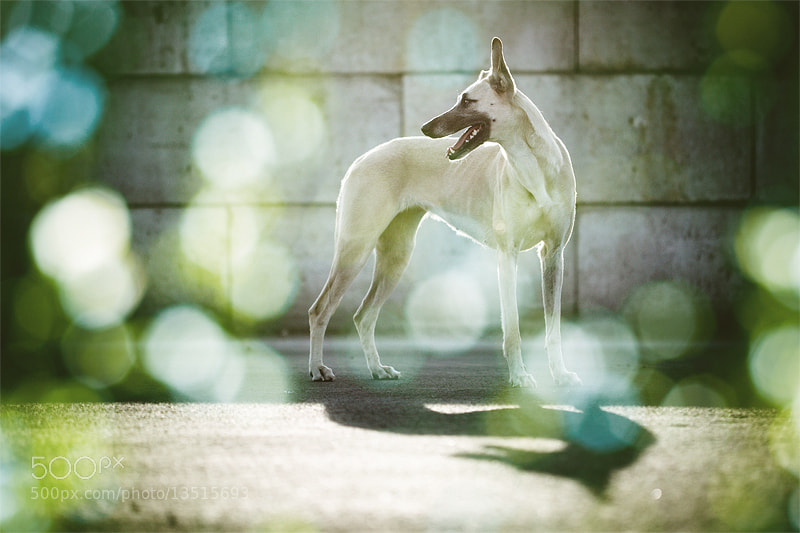 Photograph Psychedelic dog at the harbour by Elke Vogelsang on 500px
