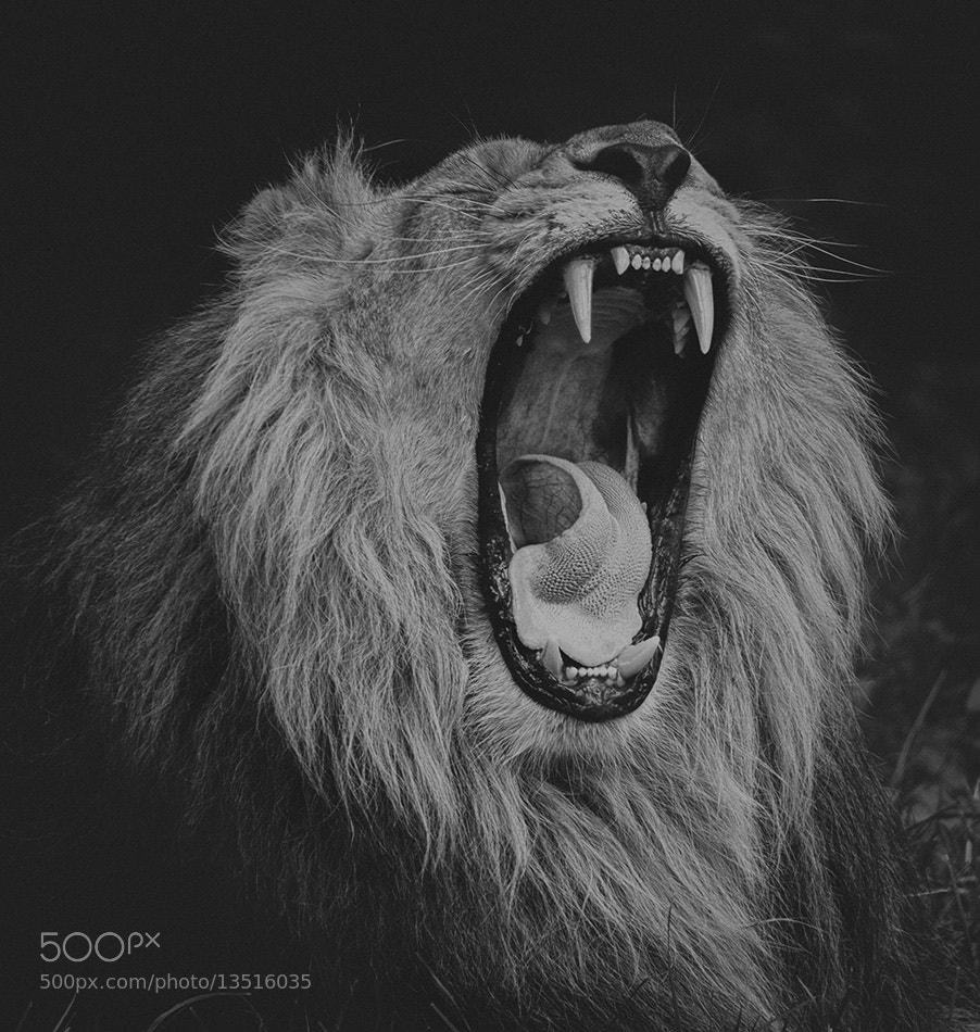 Photograph Roar! by Scott Fisher on 500px