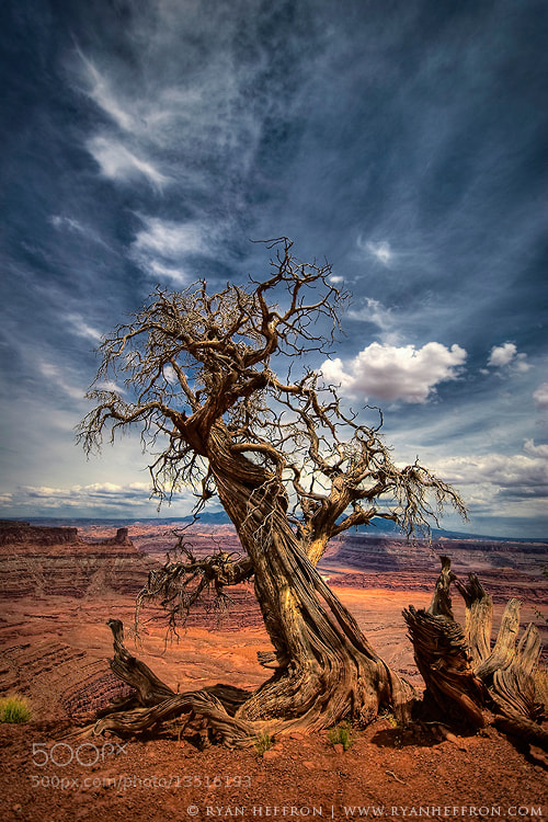 Photograph Twisted by Ryan Heffron on 500px