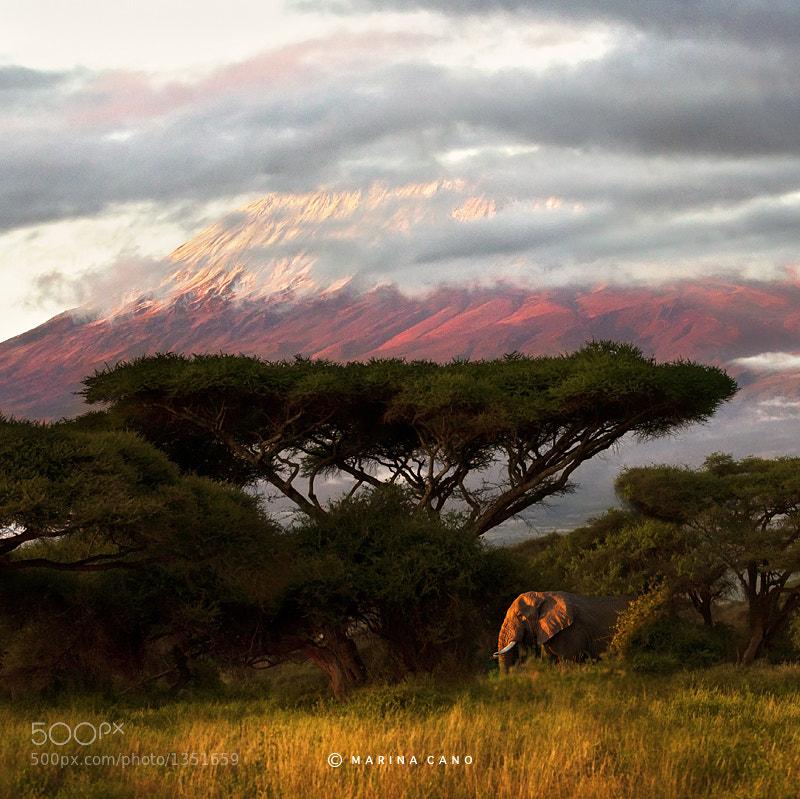 African Heart by Marina Cano (MarinaCano) on 500px.com