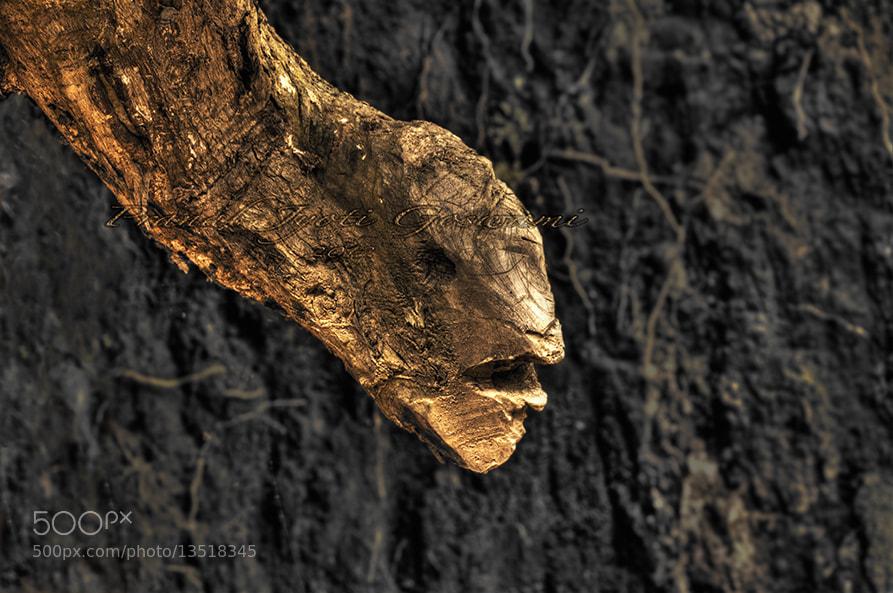 Photograph Untitled by Pranab Jyoti Goswami on 500px