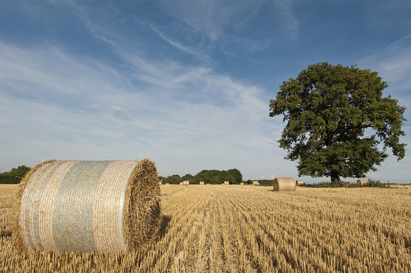 Photograph Harvest by David Witte on 500px