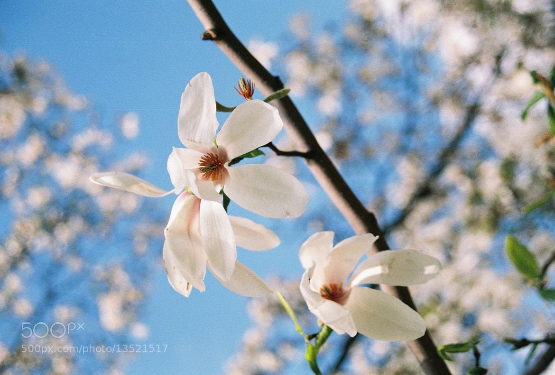 Photograph spring breeze by J Ann Tea on 500px