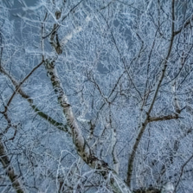 Photograph frozenTree by Lukas Bachschwell