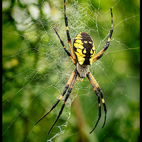 Orb Weaver by Donald Miller (DBMiller)) on 500px.com