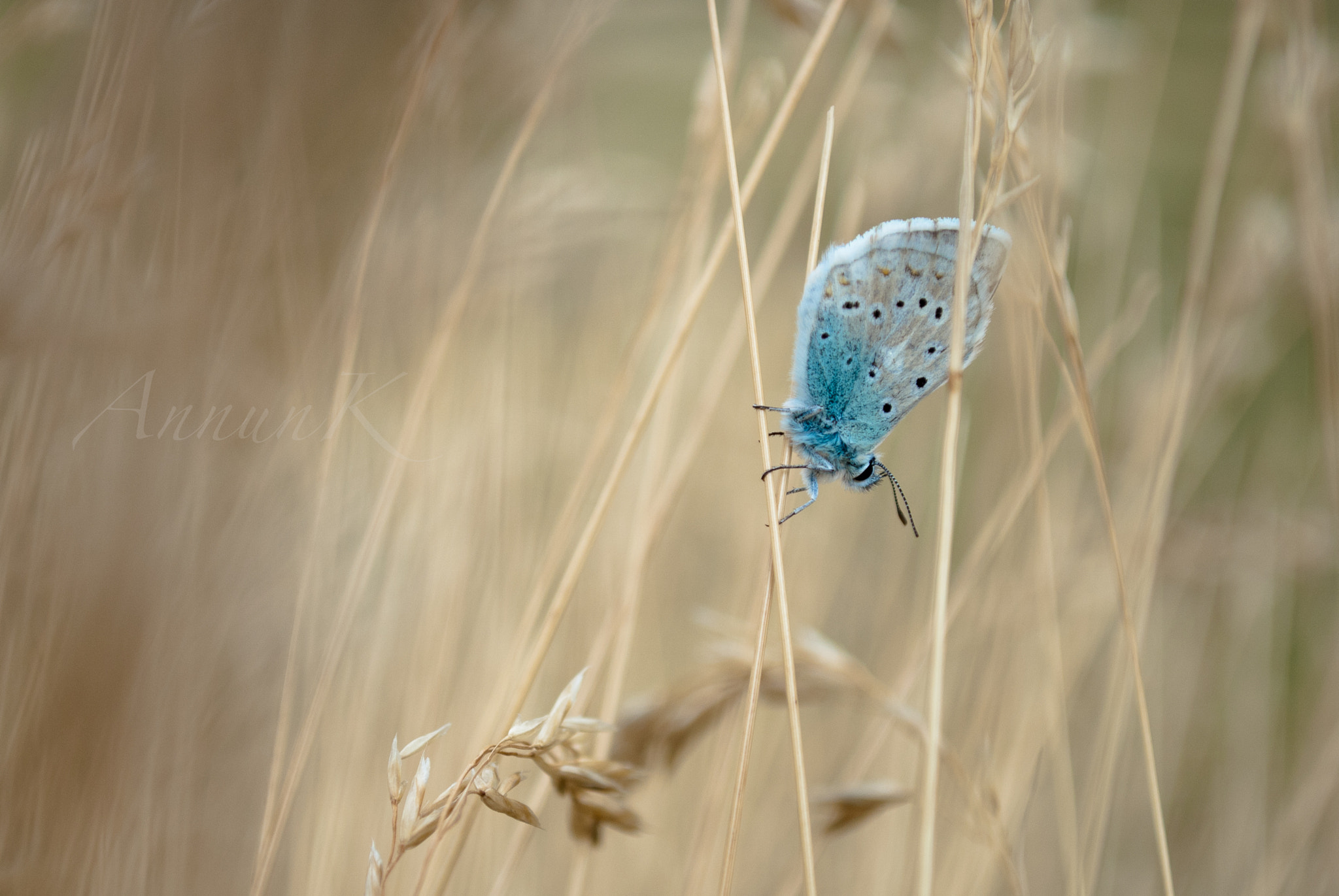 Photograph Blue butterfly by AnnunK Photography on 500px