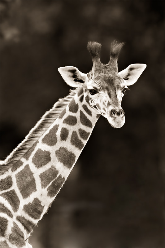 Photograph Africa B&W VI by Steven Reburgh on 500px