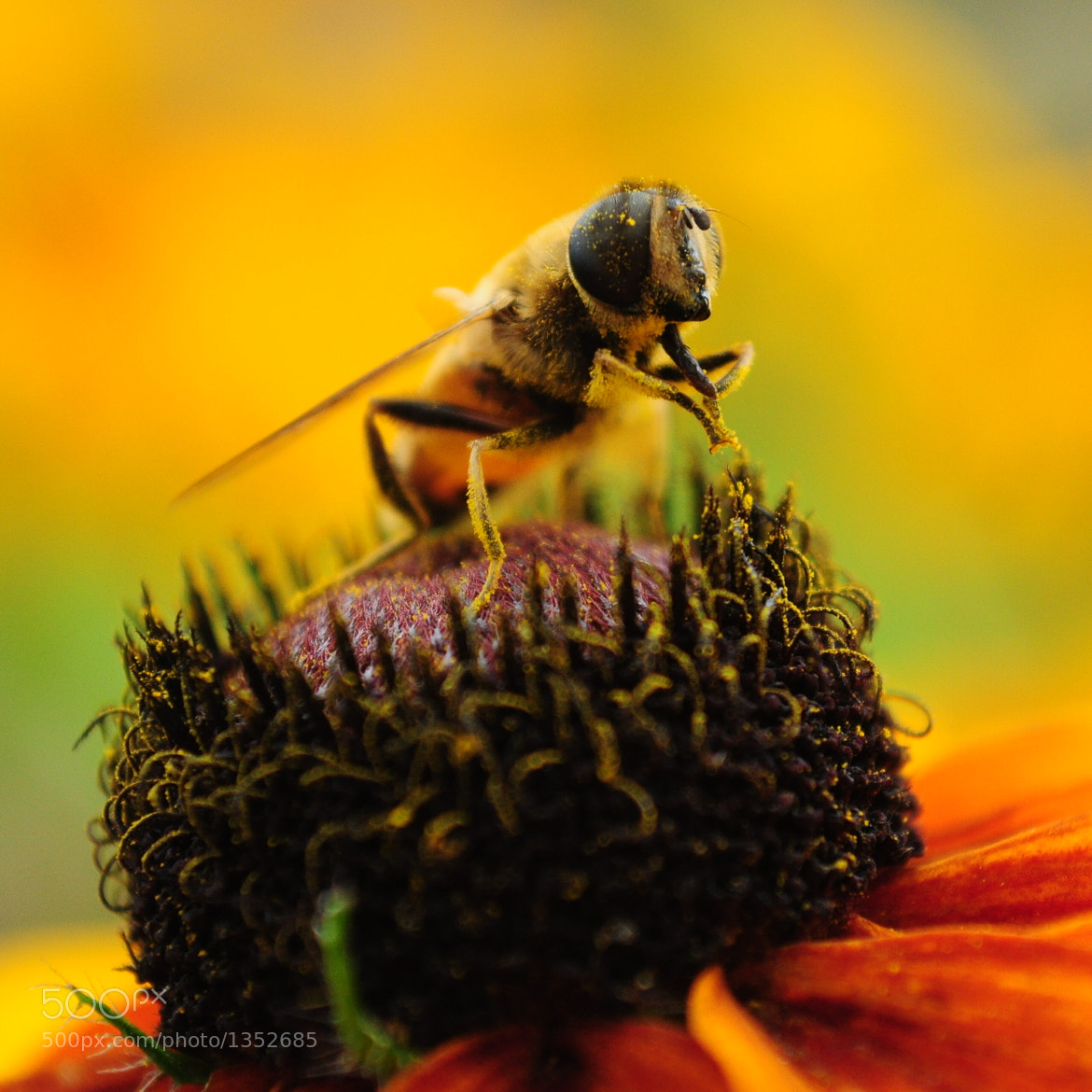 Photograph Praying bee by Andrey Buchnev on 500px