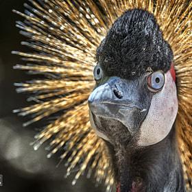 Vogel | Bird
