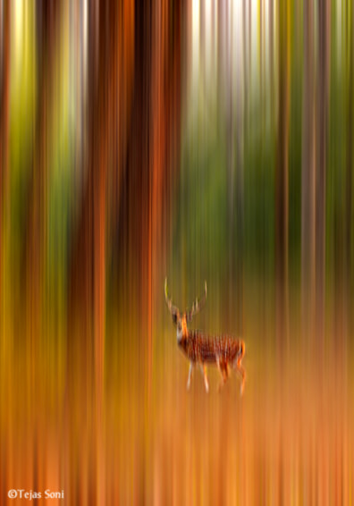 Photograph spotted deer by Tejas Soni on 500px