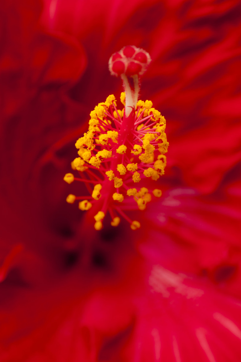 Photograph flower by KH Chaw on 500px