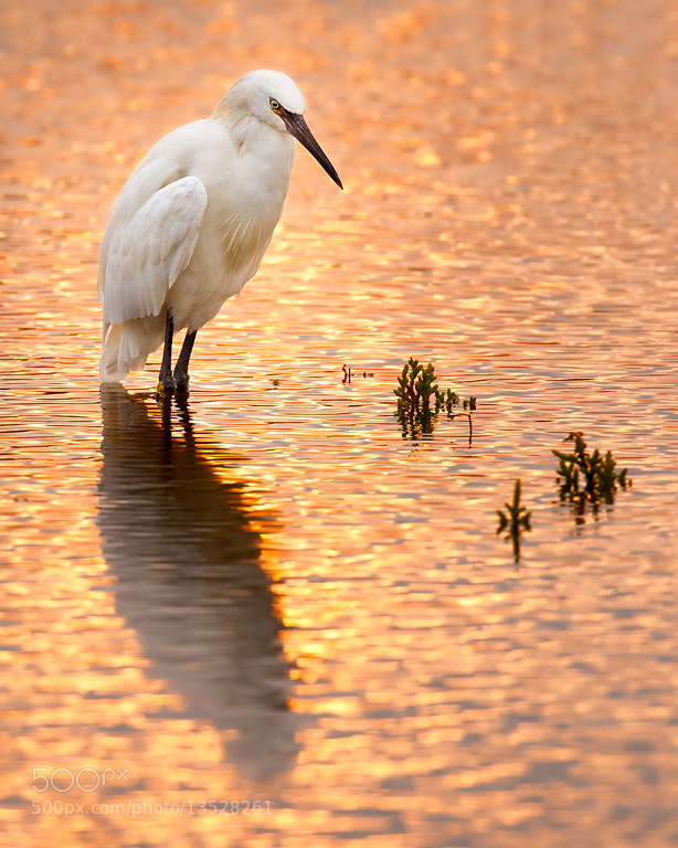 Photograph Sunset Hunter by Steve Perry on 500px