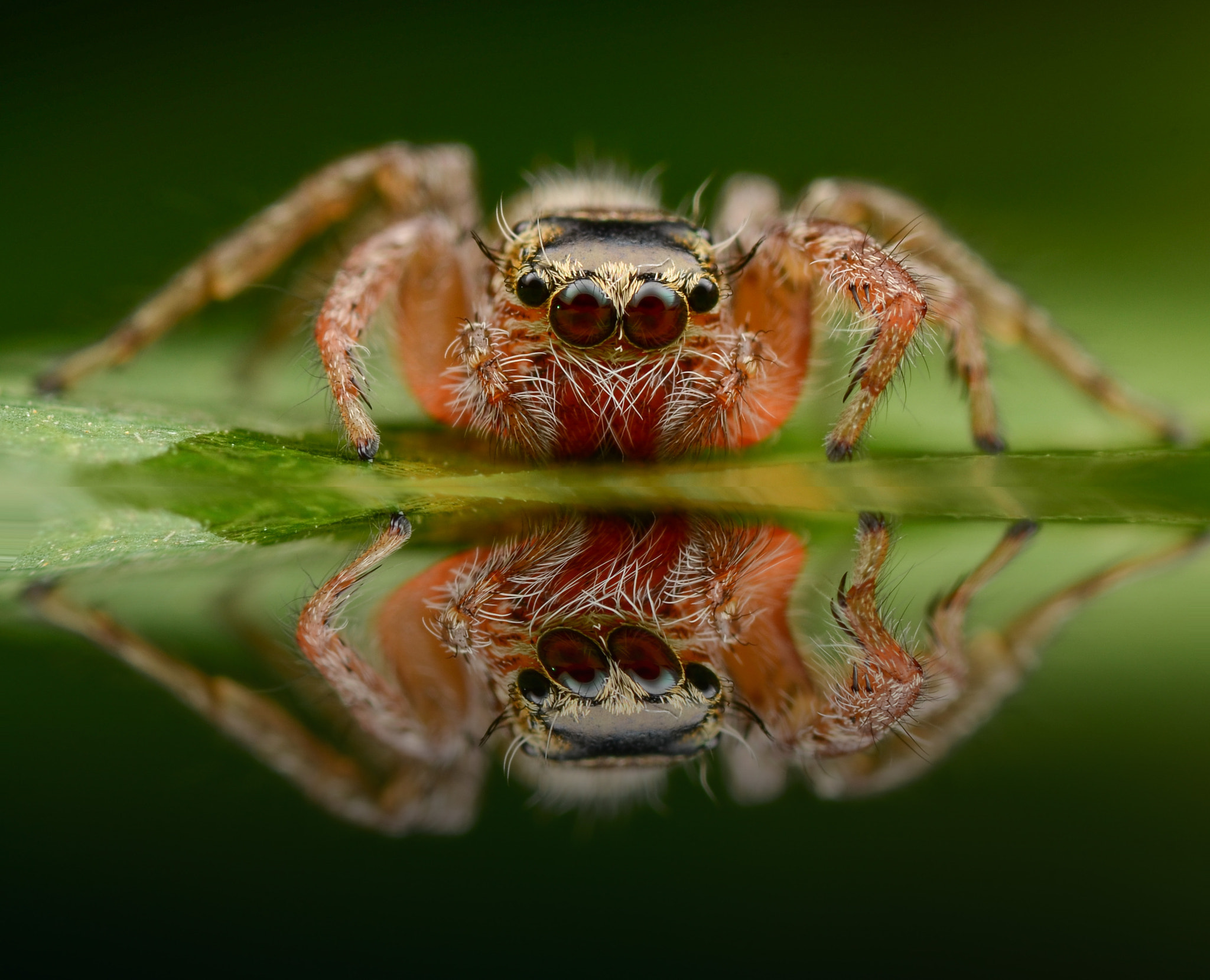 Photograph The reflection  by Bede Poukin on 500px