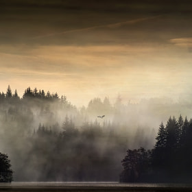 Sunrise flight... by David Mould (mouldy)) on 500px.com