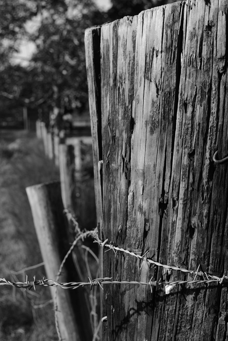 Photograph Old Fence Post by Mark Boyette on 500px