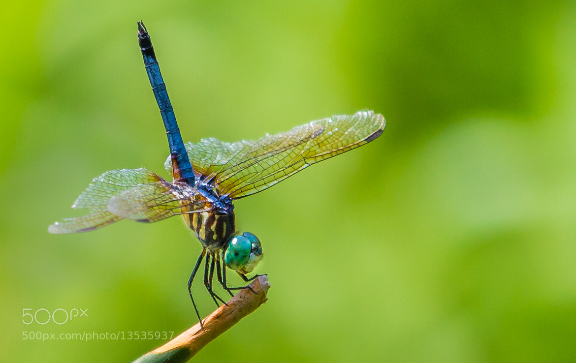 Photograph Dragonfly by George Bloise on 500px