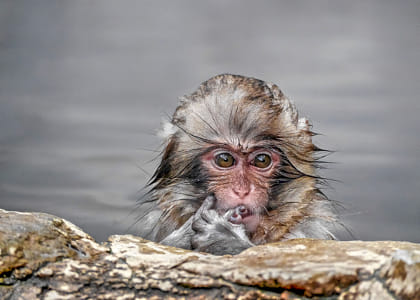 Baby Monkey in Hot Springs by Janet Weldon on 500px