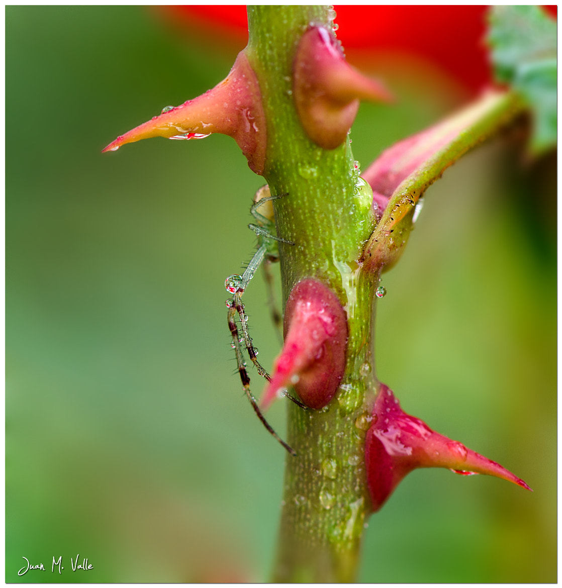 Photograph Drop in Leg by Juan Manuel Valle  on 500px