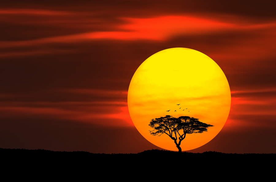 Circle of Life by Bess Hamiti on 500px.com