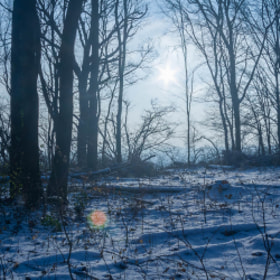 Photograph snowForest by Lukas Bachschwell
