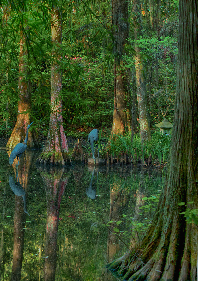 Photograph Swamp by Diane Le Fevre on 500px