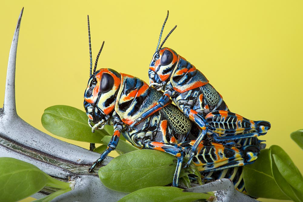 Photograph Rainbow Hoppers by Bob Jensen on 500px