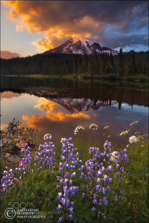 Photograph Reflection Lake Sunset by Zack Schnepf on 500px
