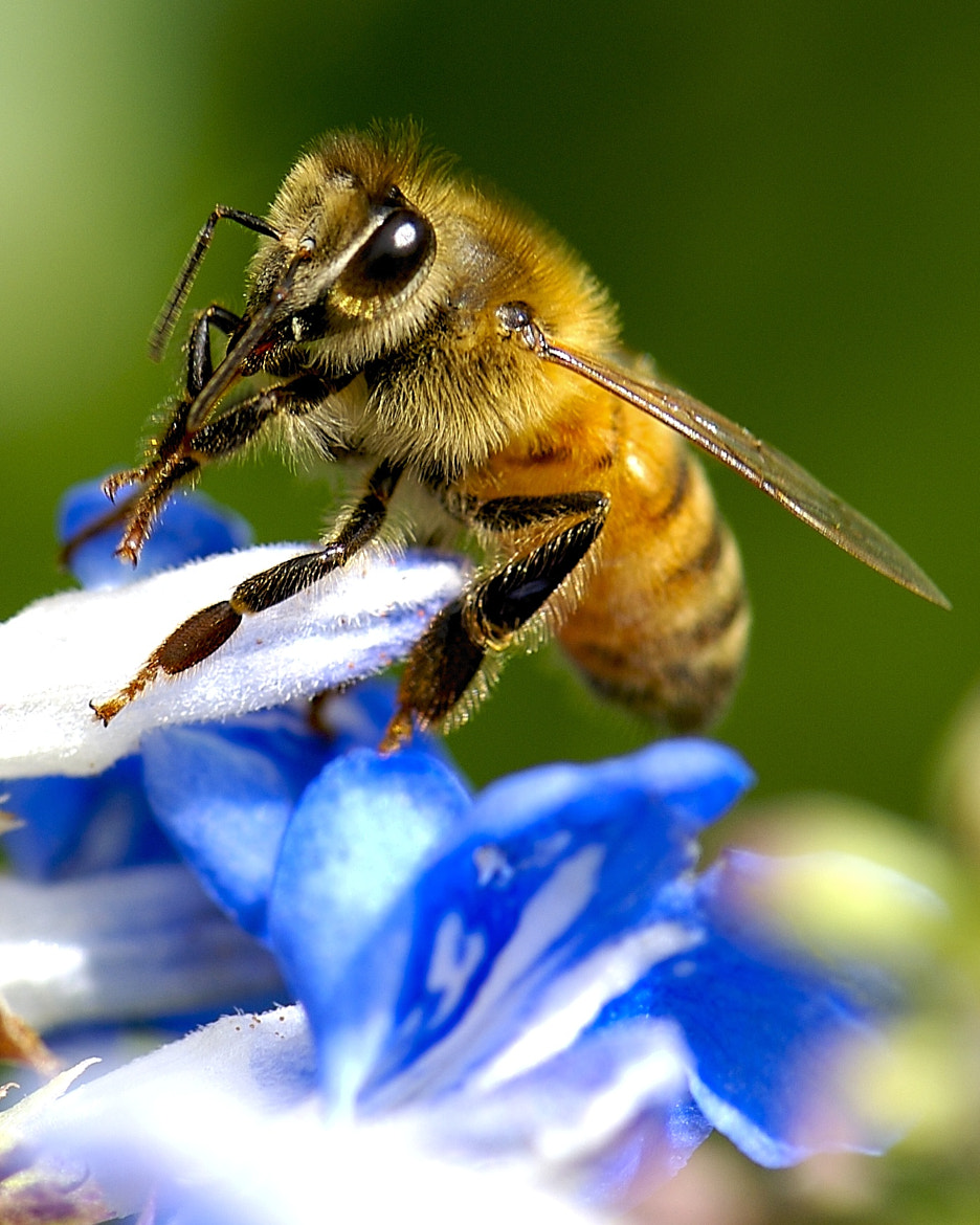 Photograph Bee Portrait! by Danny Perez on 500px