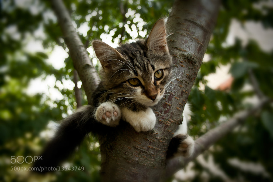 Photograph  ears, feet, tail by Georgy Ananov on 500px