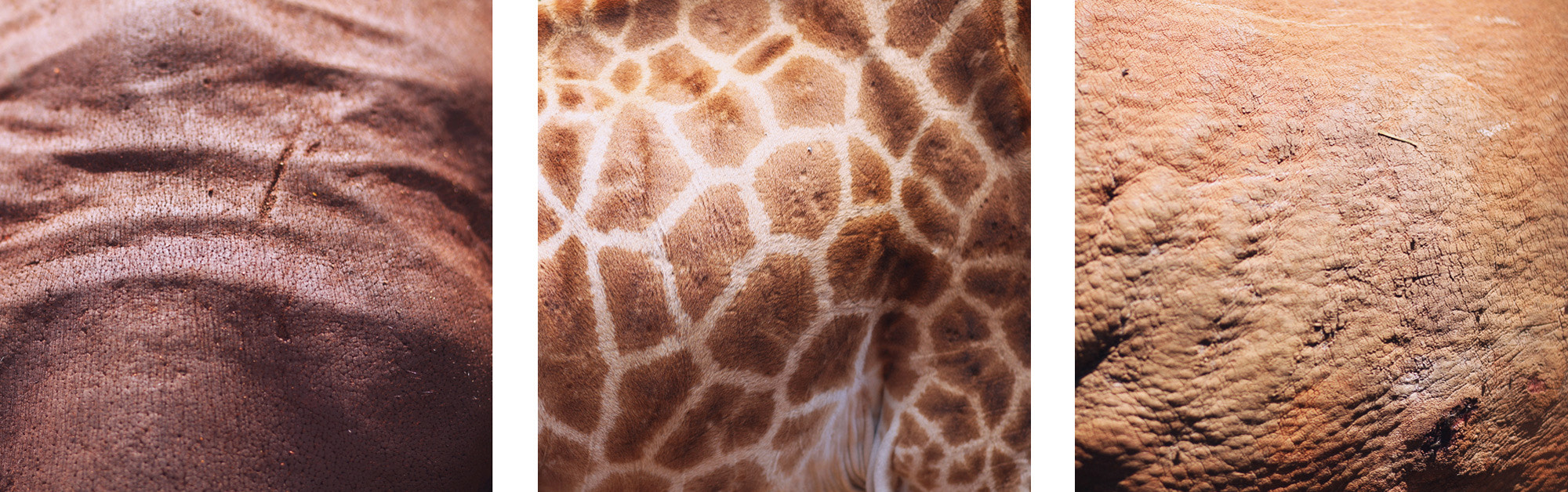 Photograph Guess the animal! by Konstantin Escher on 500px