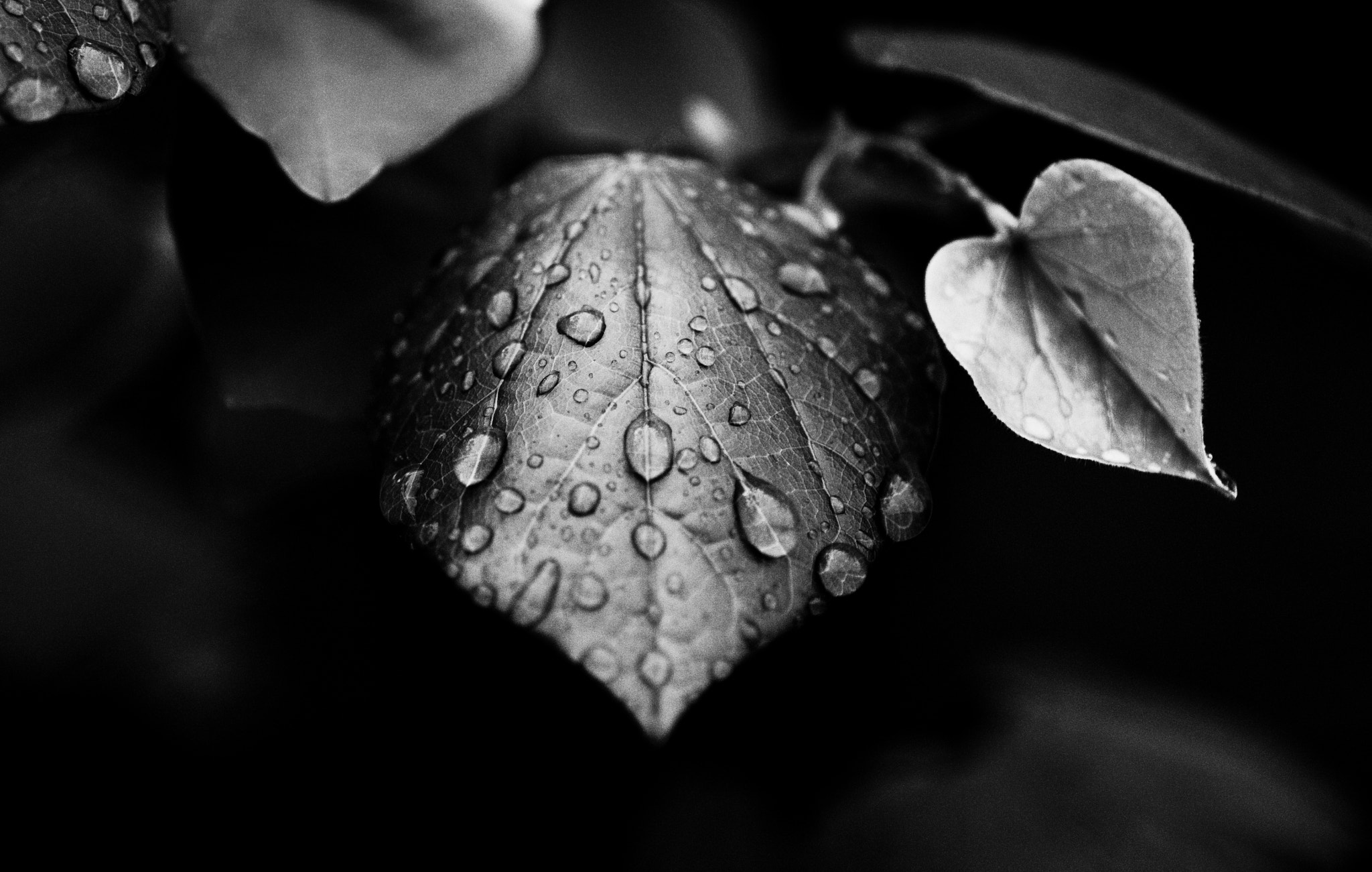 Photograph With Envy in Black and White by Rebekah Elena  on 500px