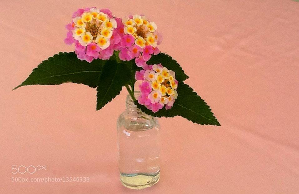 Photograph Flower by Erdi Sam on 500px
